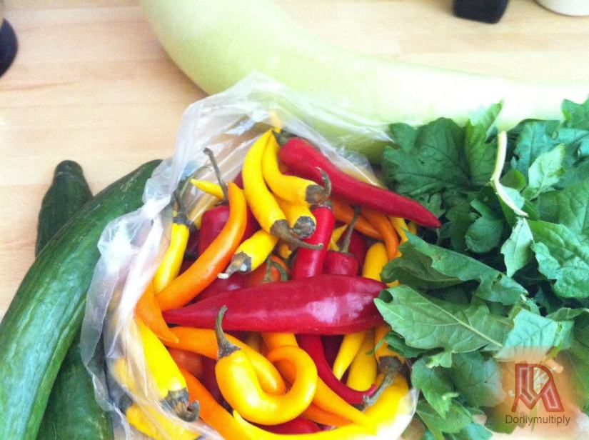 CHILIS - YELLOW, ORANGE and RED (Oblong)