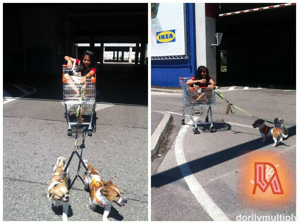 DIdi played with Doggies at IKEA